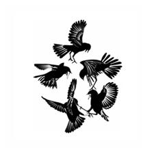 Birdfightthumb2
