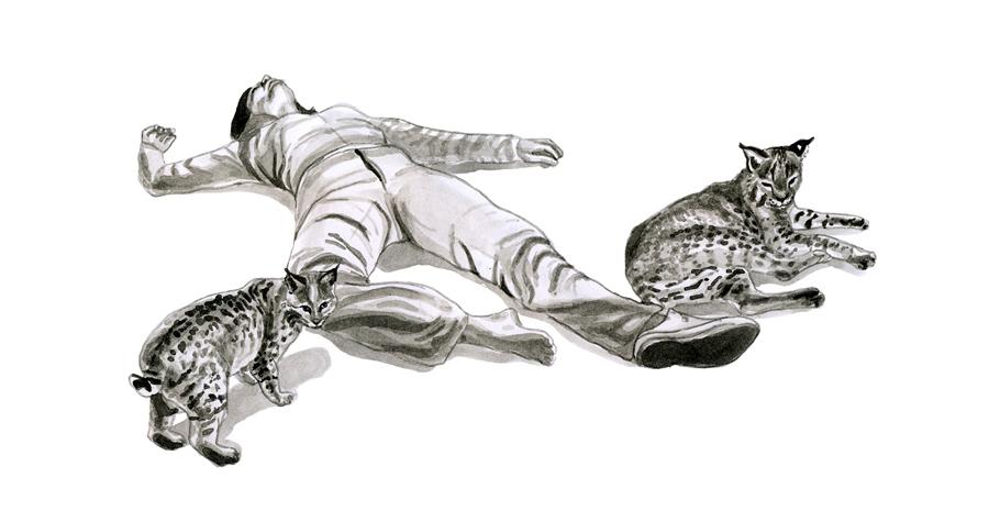 bobcats900