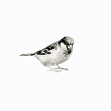 sparrowthumb2