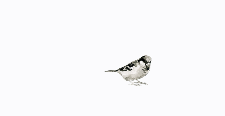 sparrowheader