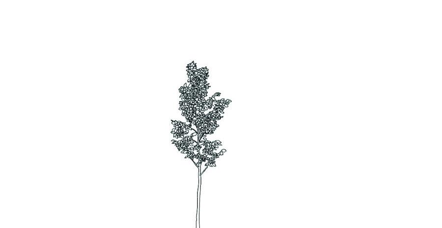 tree900
